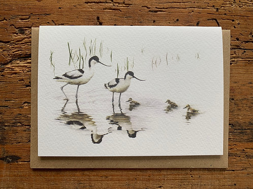 Avocet Family Greeting Card