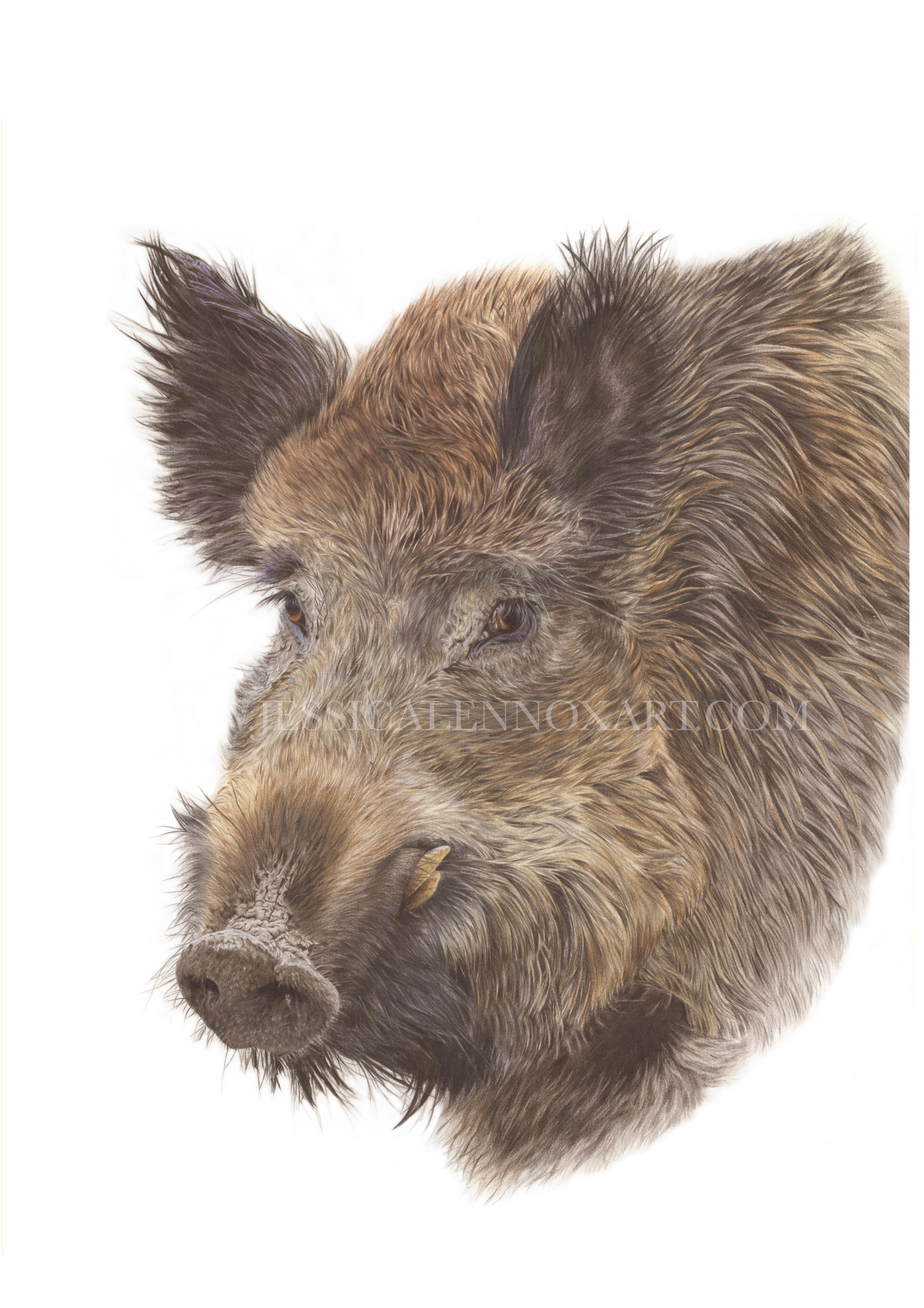 Wild Boar £3000