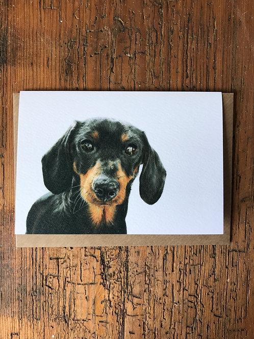 Miniature Dachshund Greeting Card