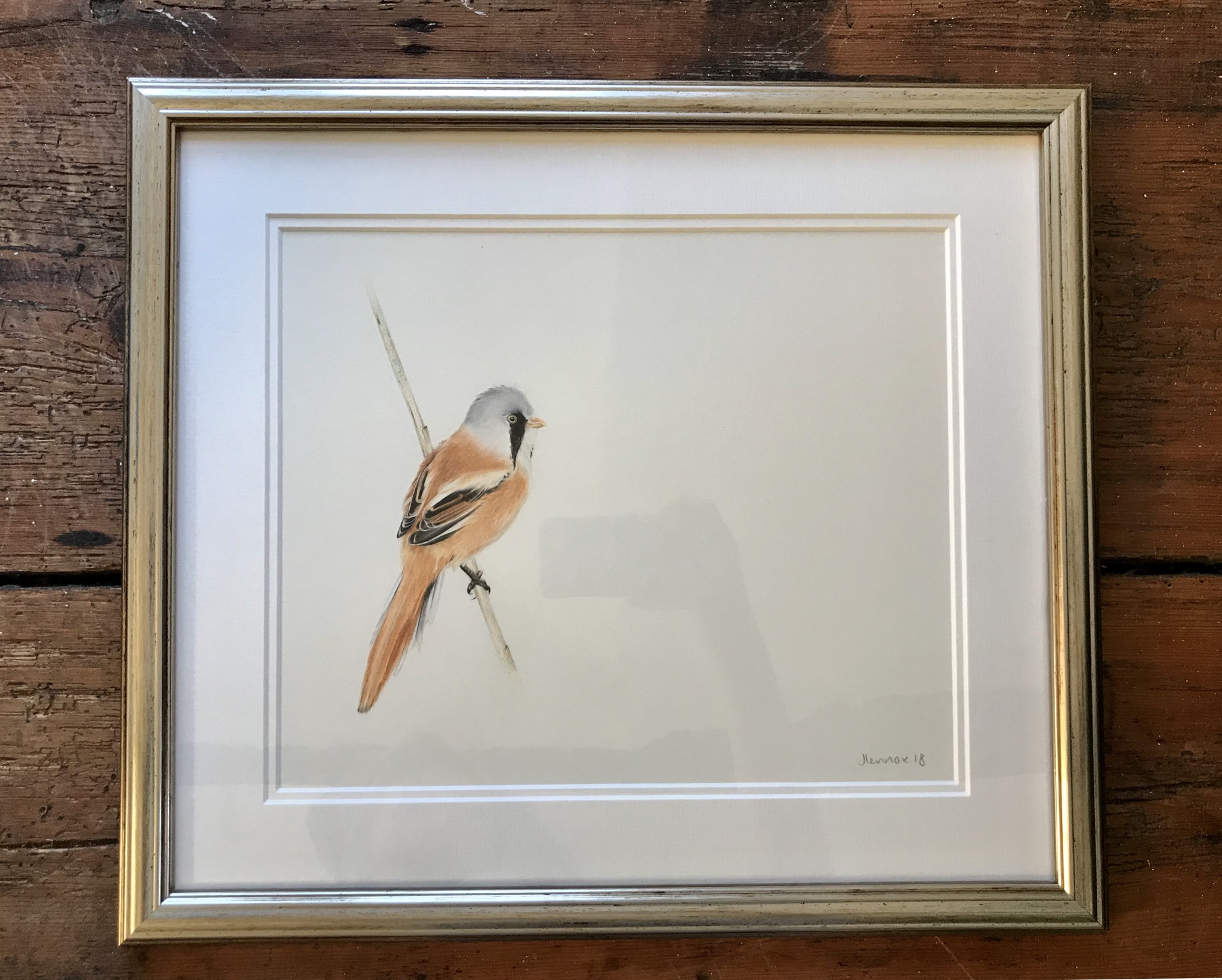Bearded Tit Study £450