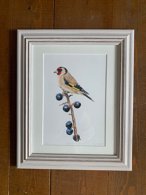 SALE Framed Goldfinch Study Print