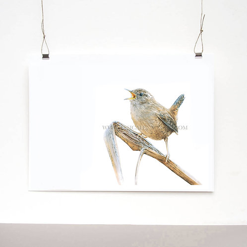 Wren Study Limited Edition Print