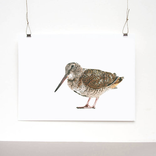 Woodcock Limited Edition Print