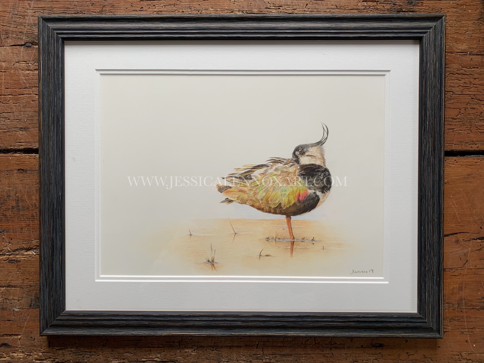 SOLD Lapwing Study