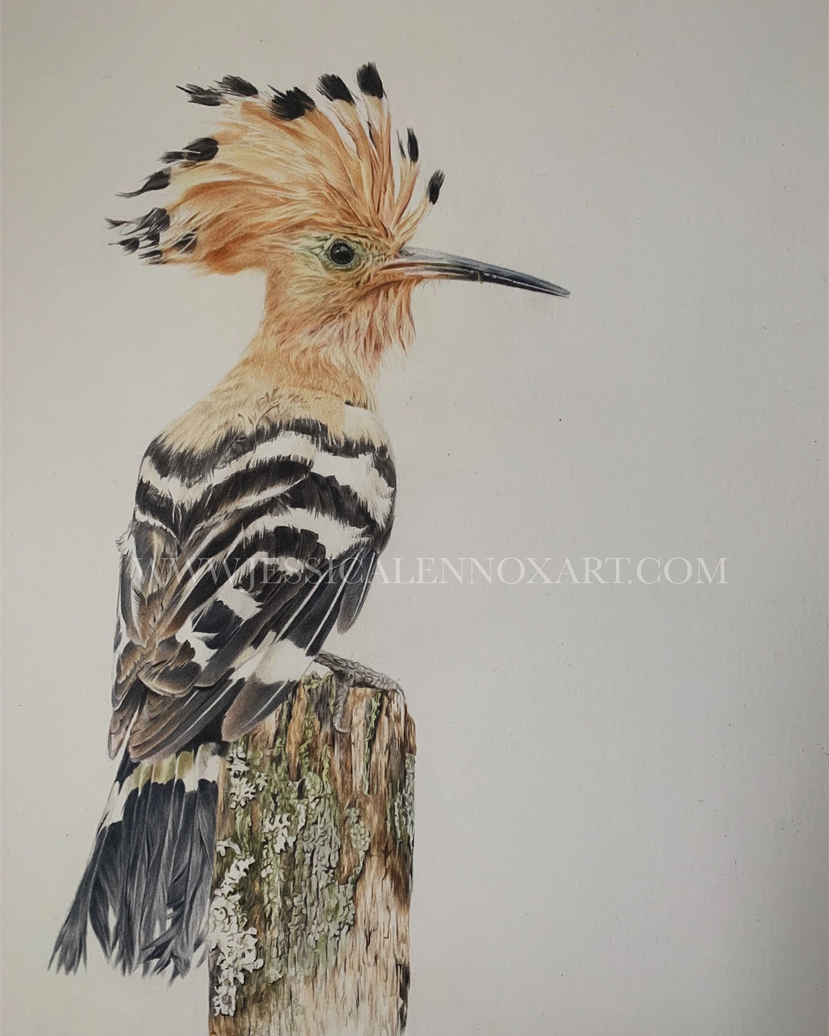 SOLD Hoopoe Study £1600