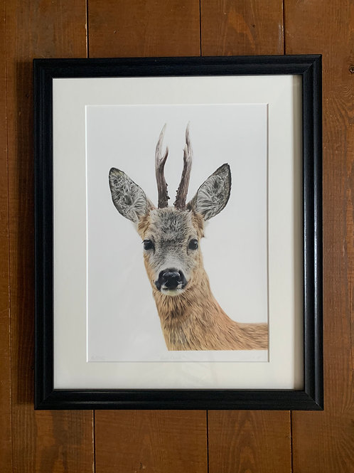 SALE Framed Roe Deer Print