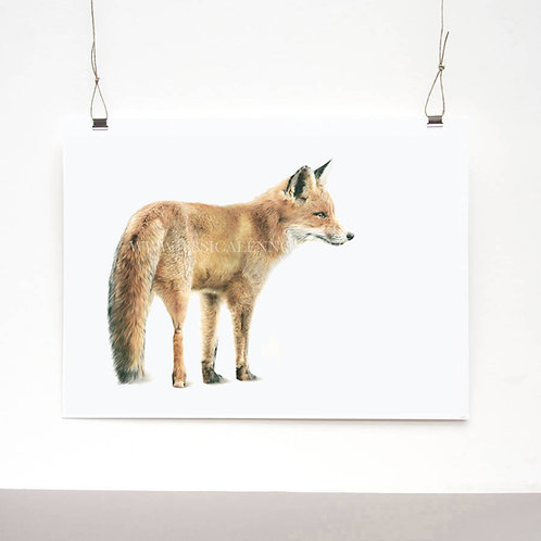 Vixen Limited Edition Print
