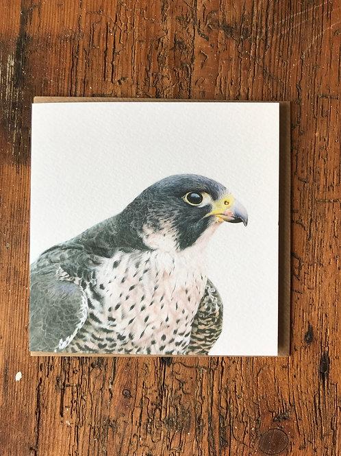 Peregrine Falcon Greeting Card