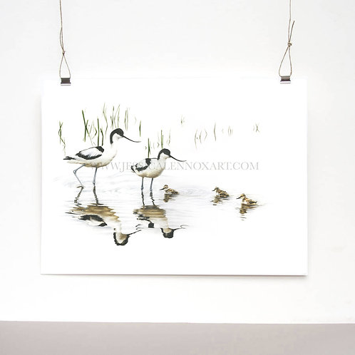 Avocet Family Limited Edition Print