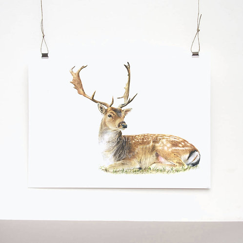 Crowned Prince Limited Edition Print