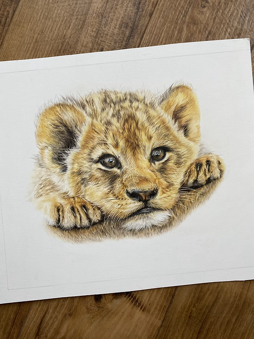 Born To Be Wild Limited Edition Print