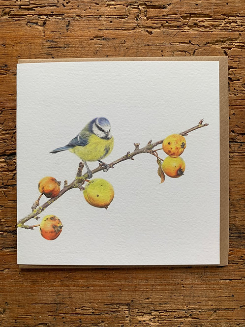 Blue Tit Study Greeting Card