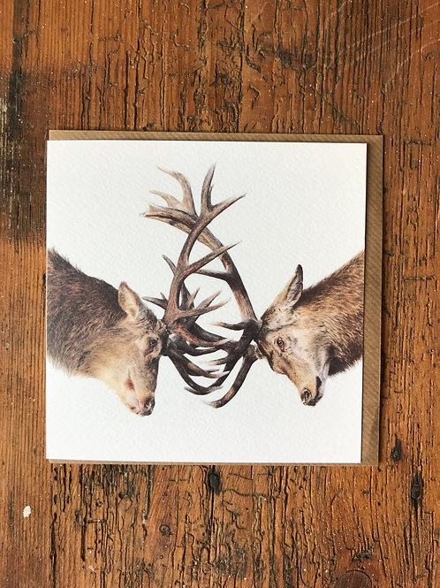 Stags Greeting Card