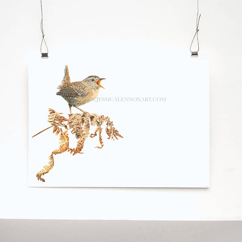 Wren Limited Edition Print