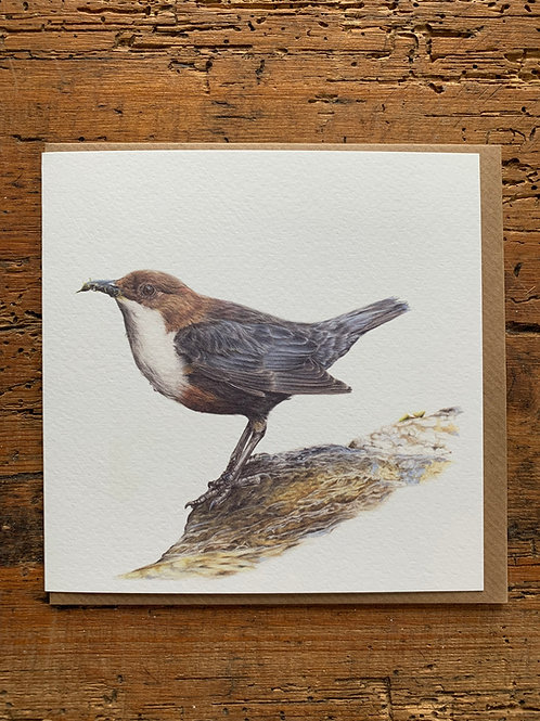 Dipper Study Greeting Card