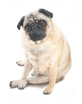 pug watermark.jpg