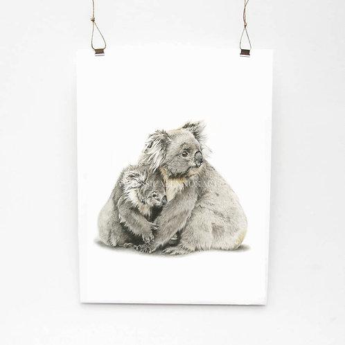 Koala Limited Edition Print