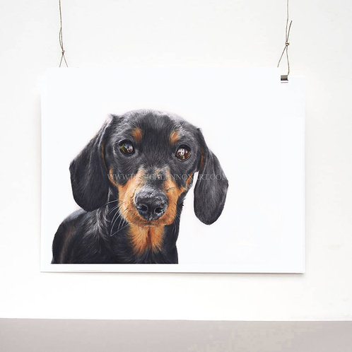Miniature Dachshund Limited Edition Print