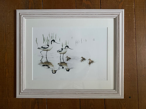 SALE Framed Avocets Print