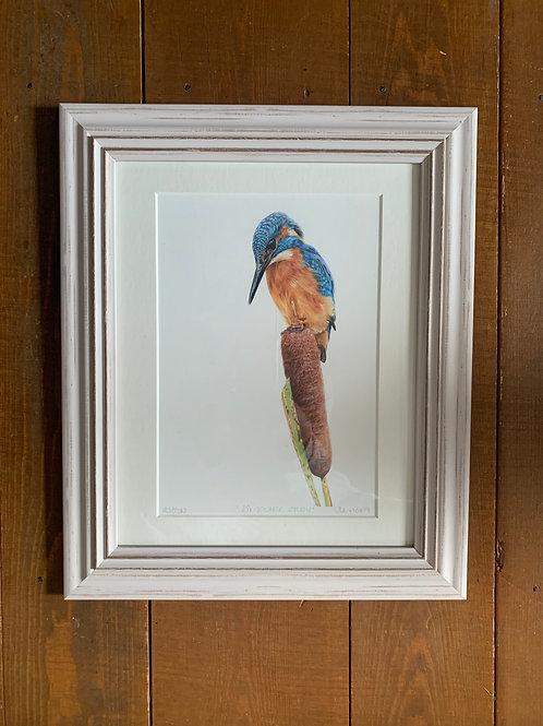SALE Framed Kingfisher Study Print