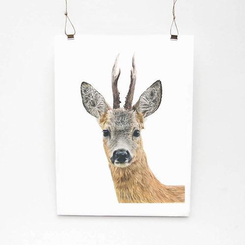 Roe Deer Limited Edition Print