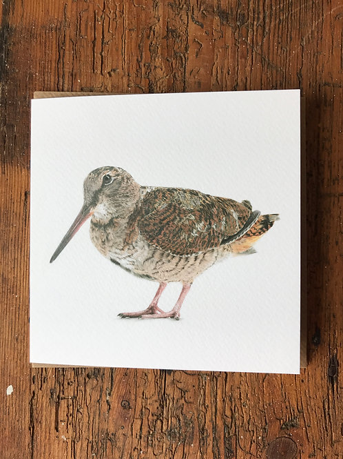 Woodcock Greeting Card