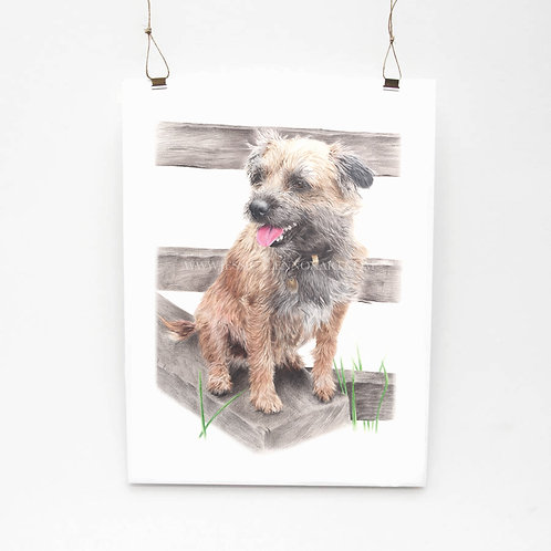 Border Terrier Limited Edition Print