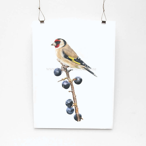Goldfinch Limited Edition Print