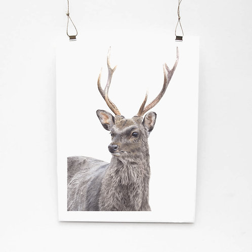 Sika Deer Limited Edition Print