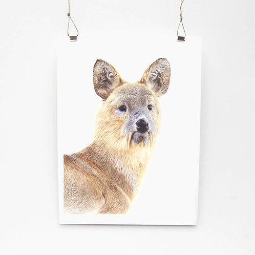 Chinese Water Deer Limited Edition Print