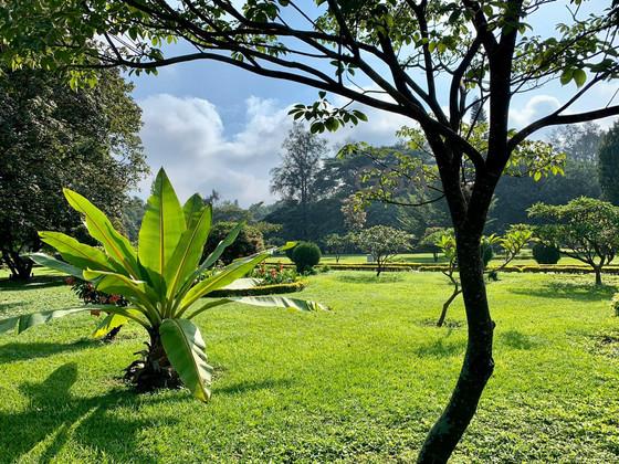 Cubbon Park—Bengaluru's Soul Space