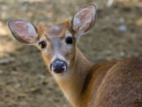El porvenir está a la vuelta de la esquina: nuevos desafíos para las instituciones zoológicas en el