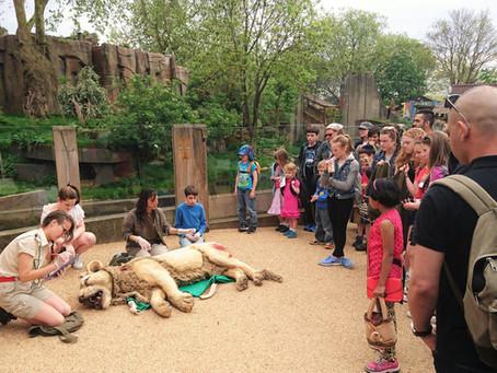 El rol de los educadores de zoológicos y acuarios en el diseño de exhibiciones