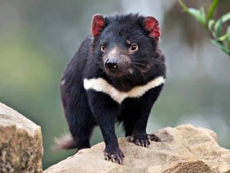 El rol de los zoológicos en conservación: el caso de Zoológicos Victoria
