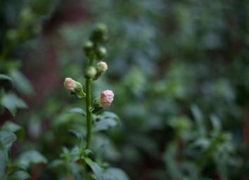 Tiny Fields Spring 17-7.jpg