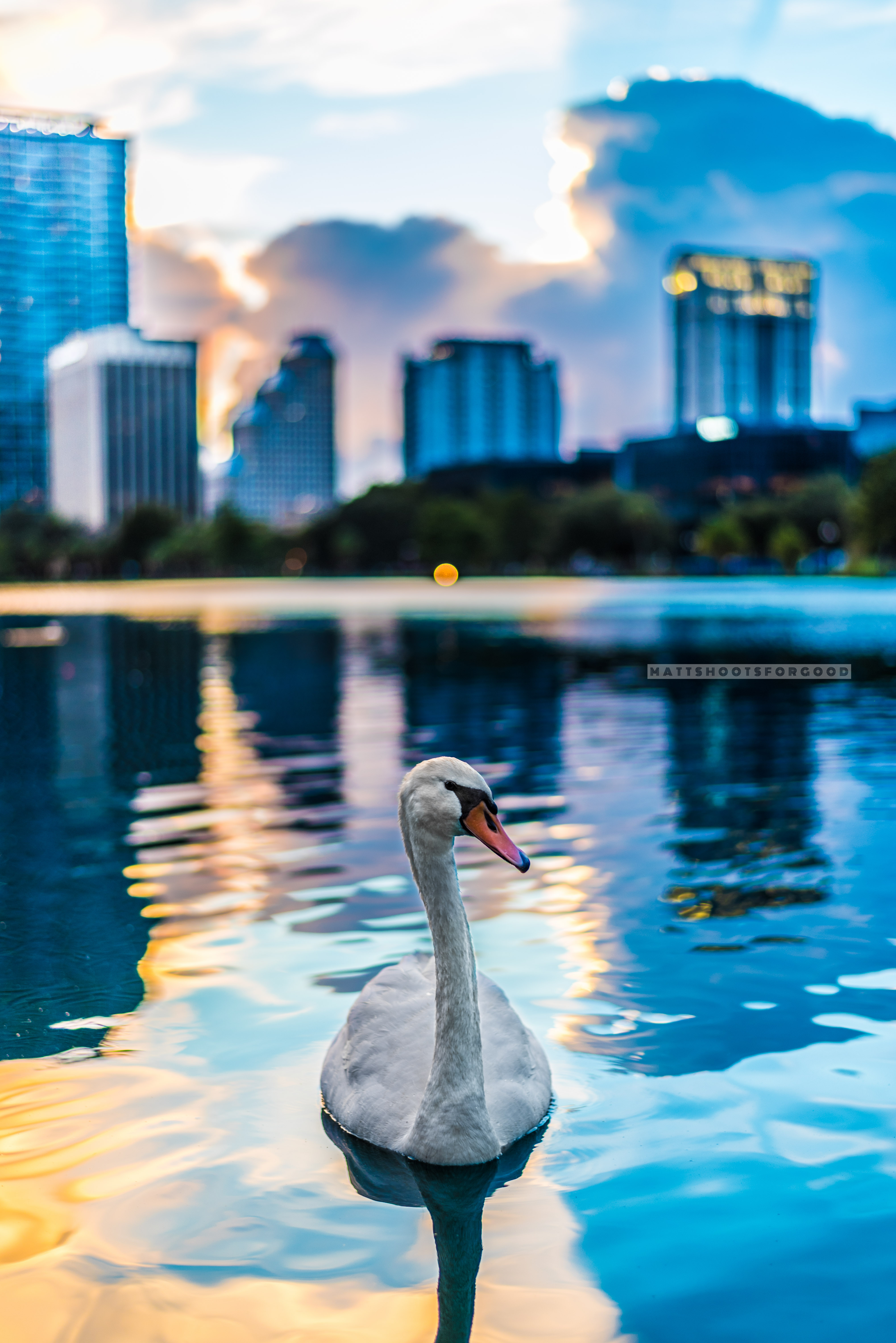 Swan in Season 1