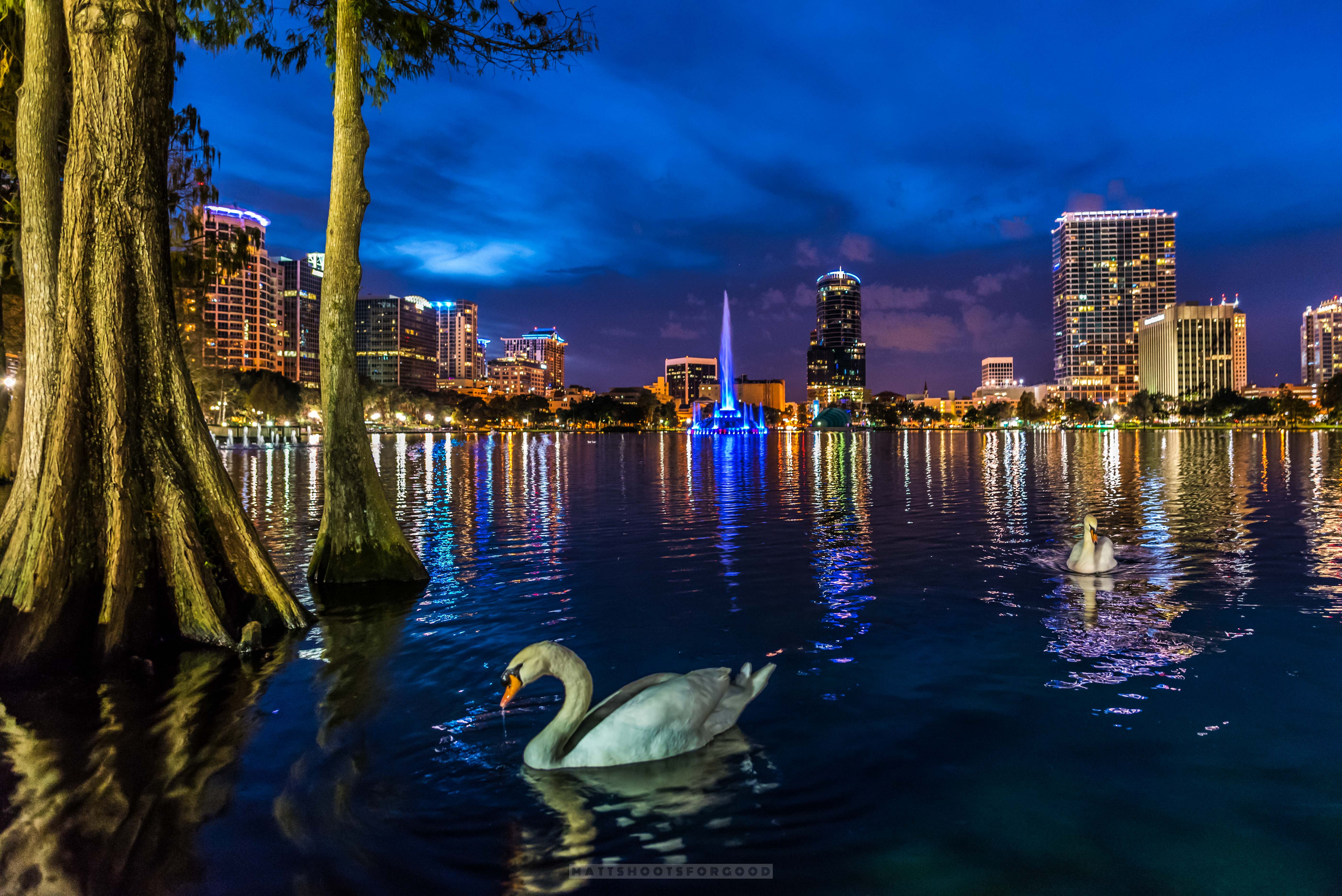 Lake Eola Goodnight Swan