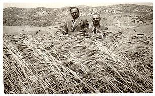 grano-sicilia.jpg