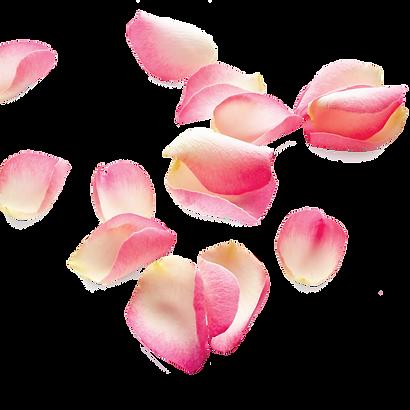 rosepetalsSTRIPpng.png