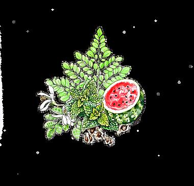 Watermelon Mint Moringa_color2.png