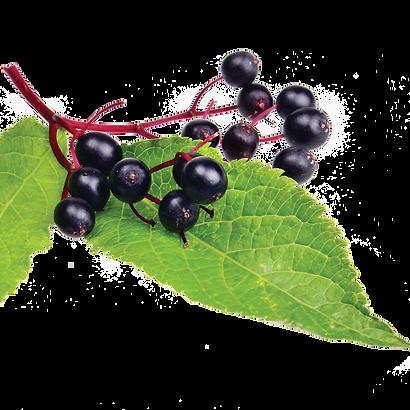 elderberrySTRIP.png