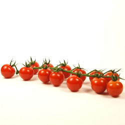 TOMATOES BUNCHED