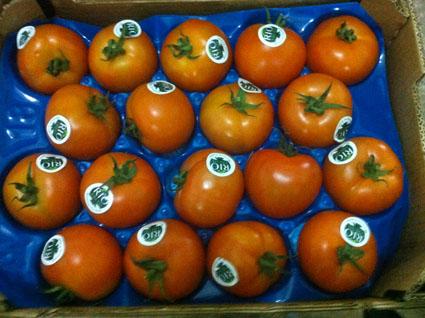 tomatoes-ronde.jpg