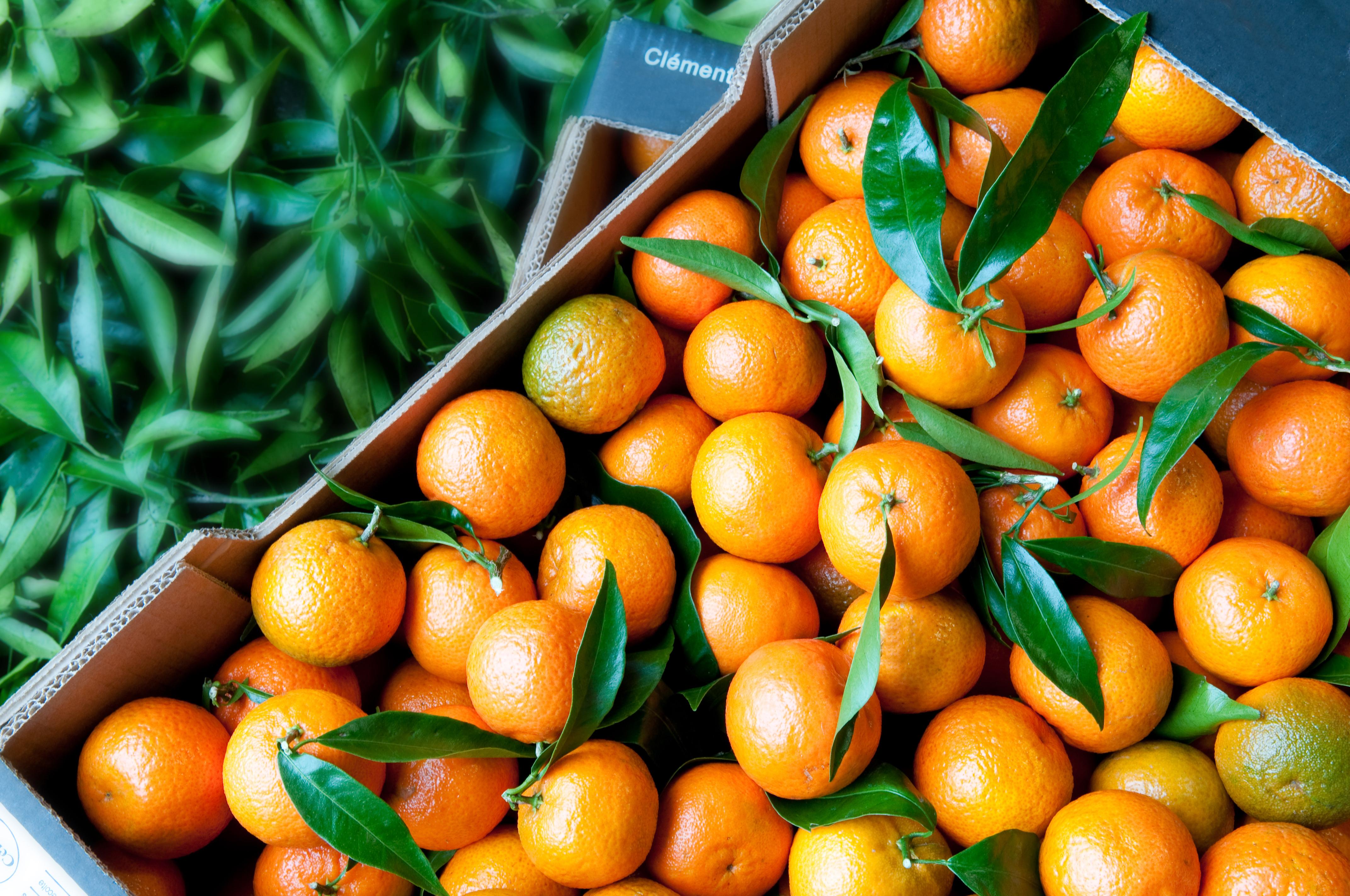 clementine8.jpg