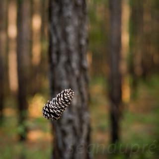 East Texas Pinecones, Fine Art Photography, Landscapes, Sean Dupre', Lufkin, Tx.