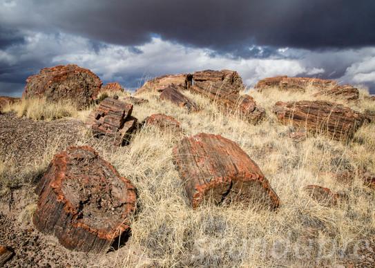 Petrified Wood NP, AZ, Fine Art Photography, Landscapes, Sean Dupre', Lufkin, Tx.