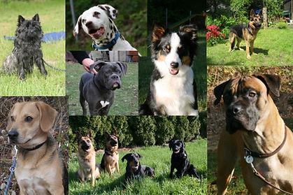 DSC Hamburger Hundeschule - Unsere Hunde