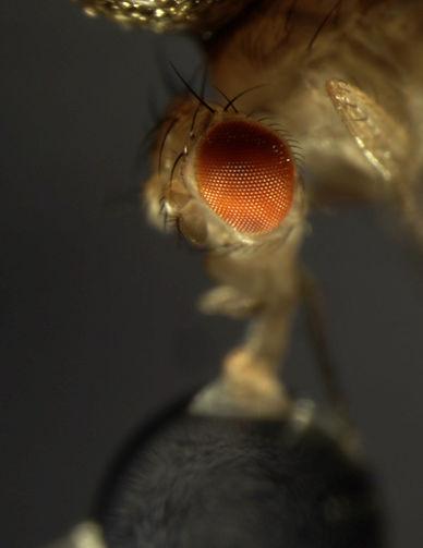 flyhead.jpg