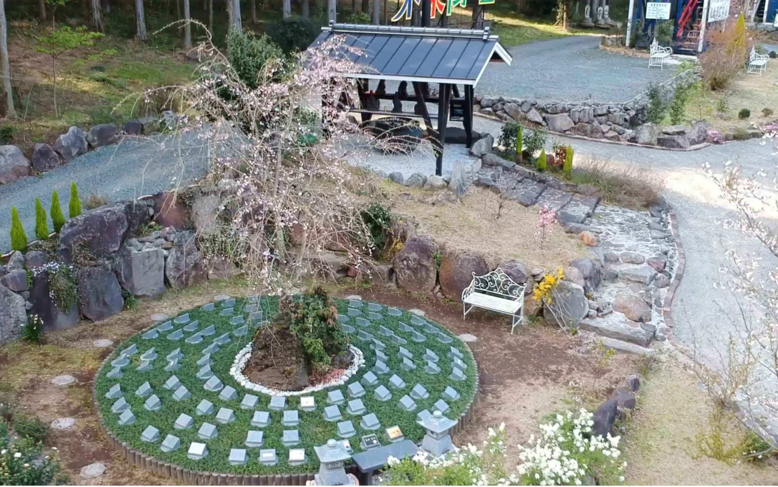 しだれ桜の樹木葬