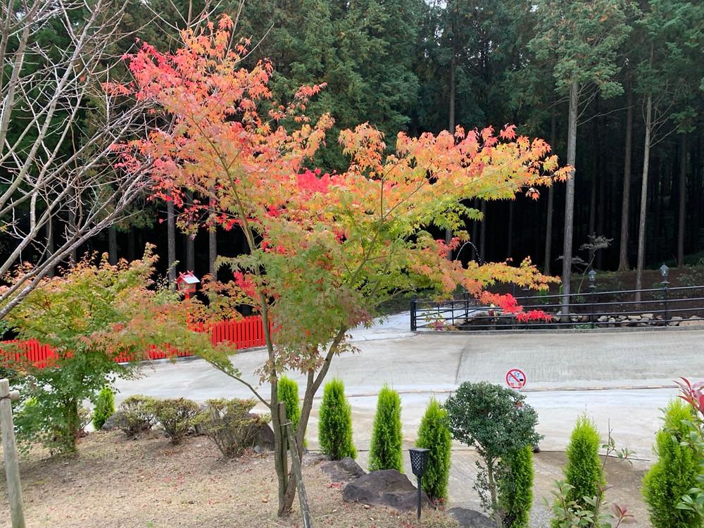 未来樹の丘の紅葉